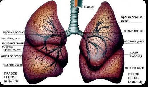 боль ребра 4
