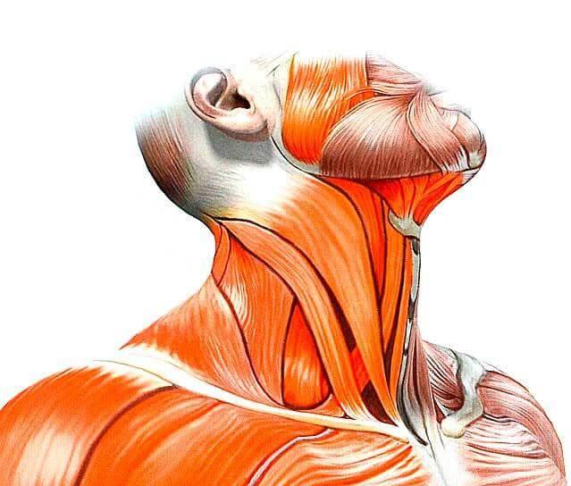 Лечение кривошеи